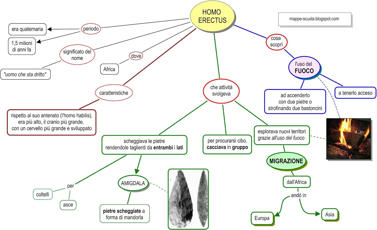 Verifica Mappa Concettuale Homo Erectus Per Scuola Elementare